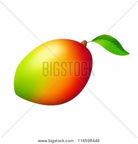Mango red yellow green fruit isolated illustration vector