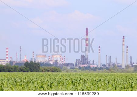 Green Field With Corn And Oil Refinery With Pipes On Horizon At Summer Day