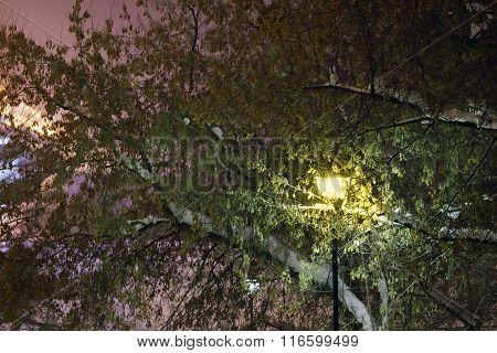 Beautiful Lantern Among Green Tree With White Snow At Winter Evening
