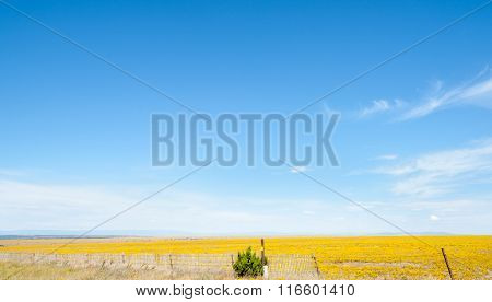 Blue Sky Over Yellow Fields In Arizona Countryside On Route 66