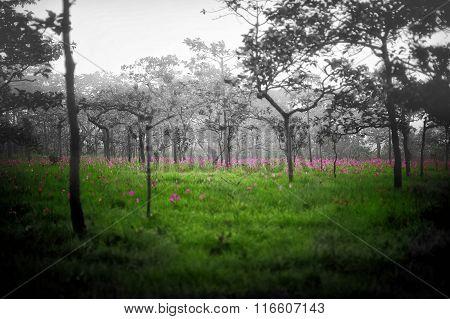 Pink Flower Garden In Fog