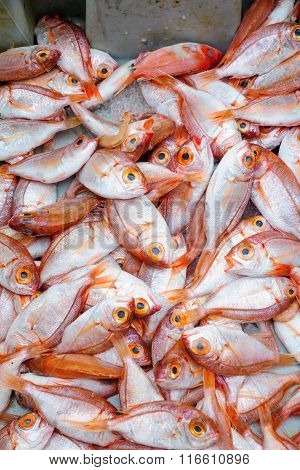 Fish On Sale In The Market