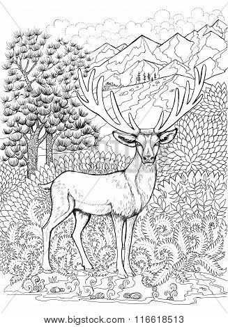 Coloring Deer With Antlers