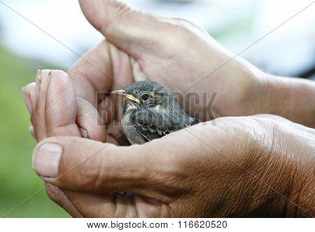 Frightended birdie