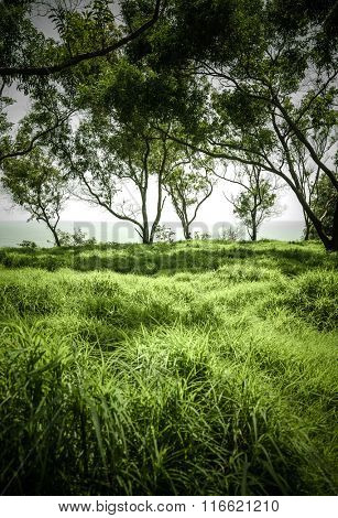 Lush green grassland and row of trees. Post monsoon wild greenery in India.