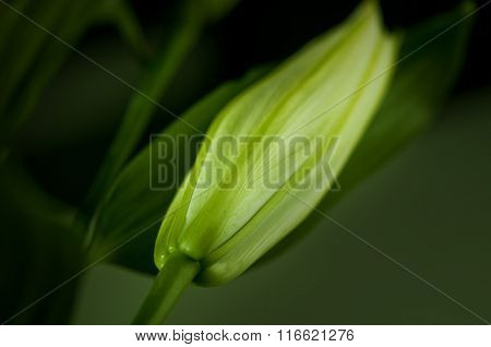 A beautiful and soft pink color flower background. Extreme close up of petals.a