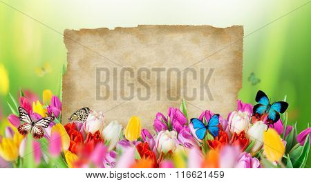 Beautiful tulips bouquet with butterflies and blank old paper. Spring theme.