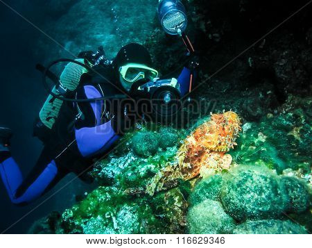 Underwater Photographer Is Taking Picture Of A Scorpion Fish