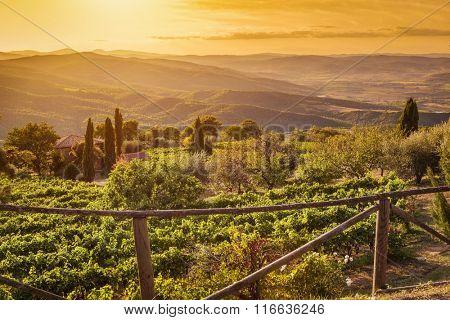 Vineyard wonderful landscape in Tuscany, Italy. Wine farm at sunset