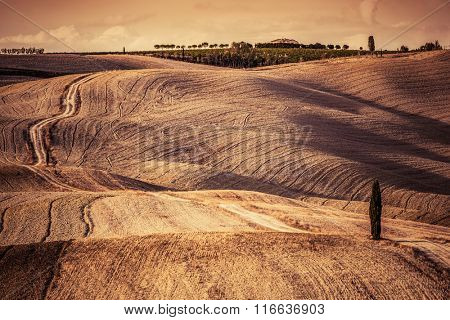 Tuscany fields autumn landscape, Italy. Harvest season makes the countryside hills and valleys nostalgic and picturesque. Lonely cypress tree and ground road