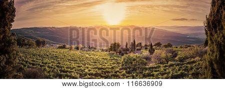 Vineyard wonderful landscape panorama in Tuscany, Italy. Wine farm at sunset