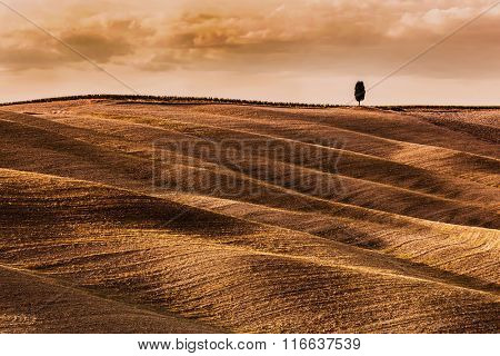 Tuscany fields autumn landscape, Italy. Harvest season makes the countryside golden hills and valleys nostalgic and picturesque. Lonely cypress tree