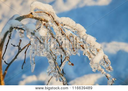 Tree Branch With Spring Icicles And Snow