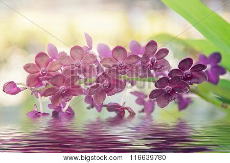 Beautiful purple orchids flower tree and water reflection.