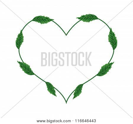 Fresh Green Leaves In A Beautiful Heart