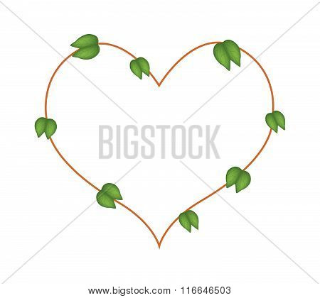 Bauhinia Purpurea Leaves Forming In Heart Shape