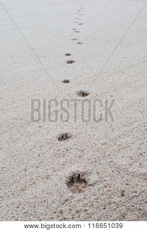 Dog Footprints On Sand Beach.