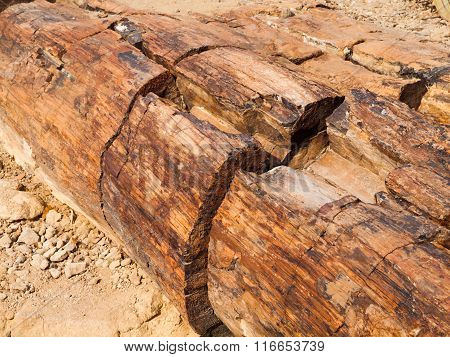 Detailed view of petrified tree trunk