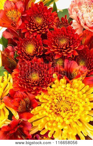 Red And Yellow Flowers Close Up