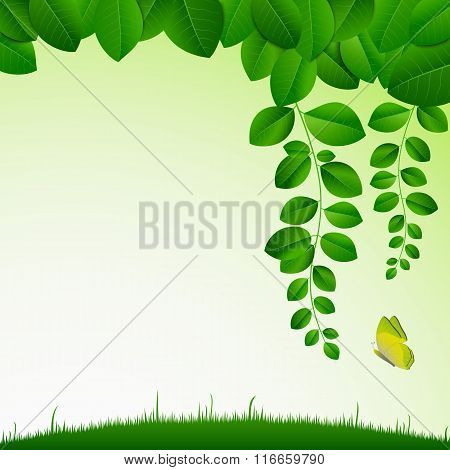 Spring Green Meadow With Leaves And Butterfly