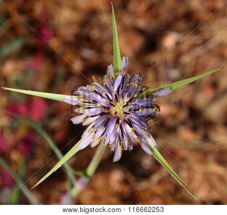 Wild thistle flower isolated