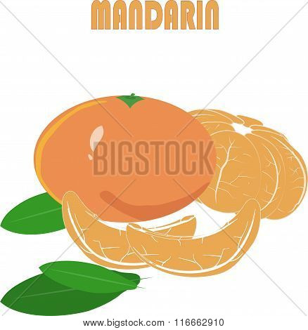 Orange mandarin, green roots, leaves, slice on white background, hand drawing, painting
