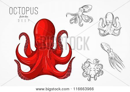 Template For Logos, Labels And Emblems With Outline Silhouette Octopus. Vector Illustration.