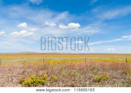 Arizona Countryside Field Yellow Rabbit Brush Flower Blue Sky With White Puffy Clouds