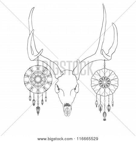 Skull of a deer with dream catchers