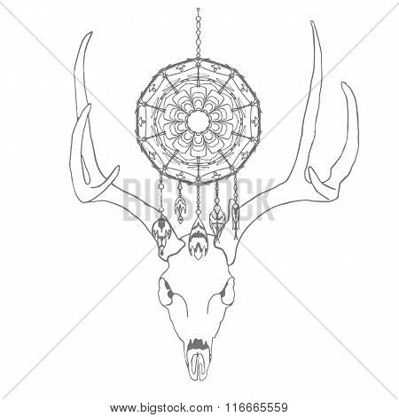 Skull of a deer with dream catcher
