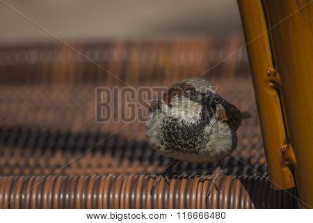 sparrow on a chair