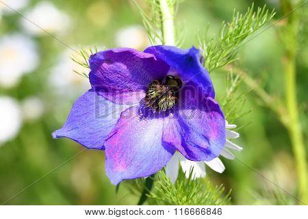 blue bell blossom