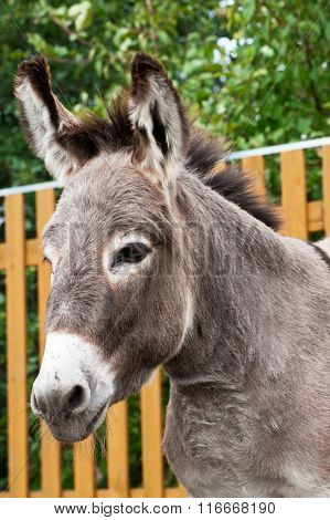 Donkey closeup portrait in sunny day