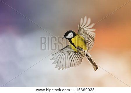 bird bird fly stretch your wings