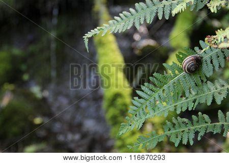 snail crawling on fern