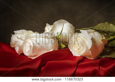 White rose on red satin.