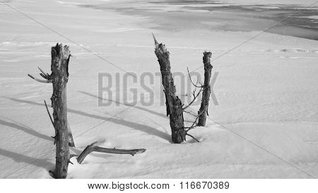 Broken Tree Trunks In Snow