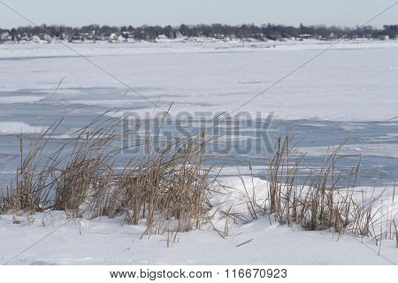 Cattails On The Frozen Shore