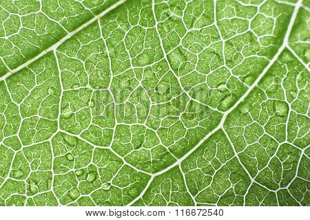 Macro Close Up Photo Of A Green Leaf