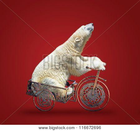 Polar bear in a vintage cart