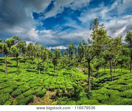 Green tea plantations in hills with dramatic sky. Munnar, Kerala, India