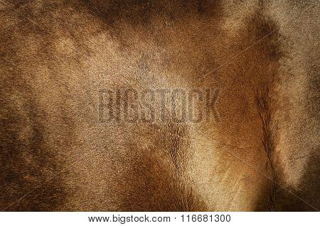Texture Of Golden Coat Of Horse