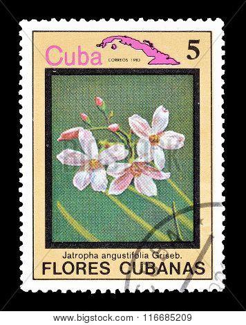 Cuba 1983