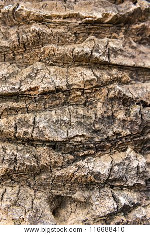 Old Dry Palm Tree Rind Texture