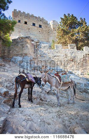 Donkeys in Lindos on the Rhodos island, Greece.
