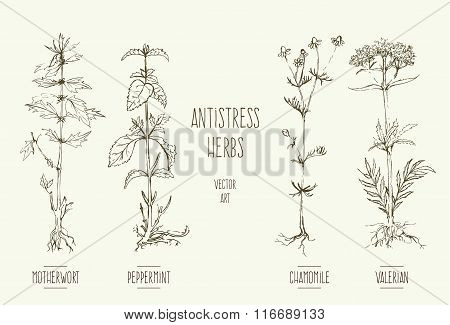 Antistress herbs