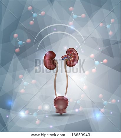 Kidney Protection Abstract Design
