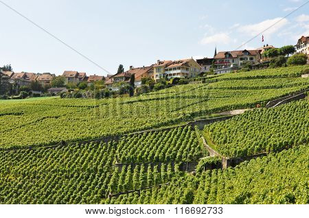 Vineyards in Lavaux, Switzerland