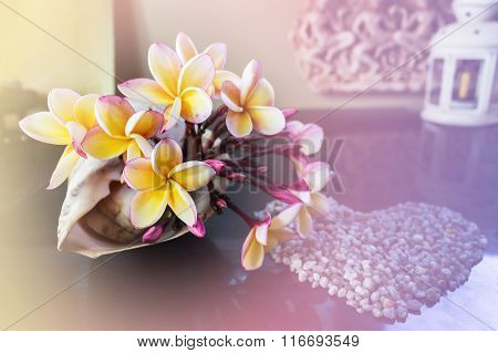 Yellow Flowers Beautiful Frangipani Decorated In Sea Conch Shell