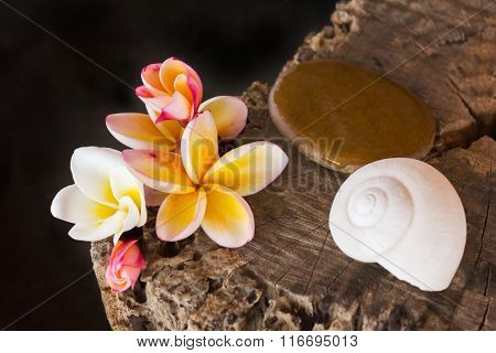 Flower Frangipani Or Plumeria,pebble And Shell On Wood Stump